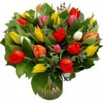 Gemengde Tulpen